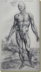 Planche anatomique de Vésale