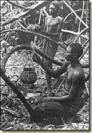 Récolte du caoutchouc